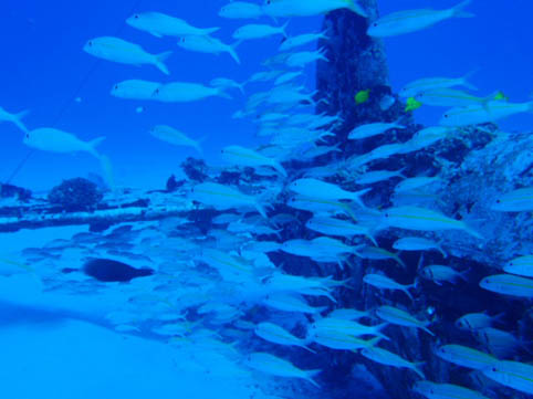 hwi diving1.jpg